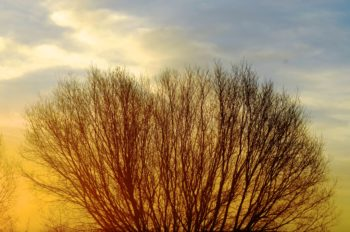 Some Resources for Grounding and Gaining a Sense of Purpose in the Morning