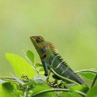 chameleon-1900816_1920