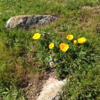 pierce point flowers